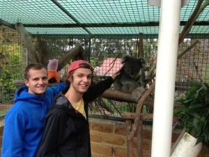 Peyton, Me, and the Koalas